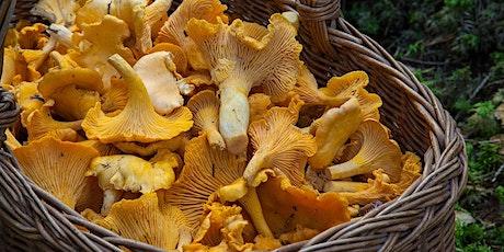 Mushroom Foraging Walk tickets