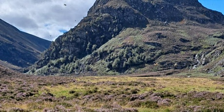 Management for serious heather honey production in the wilds of Scotland tickets