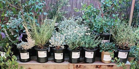 Landscaping with Native Plants with Artemisia Nursery tickets