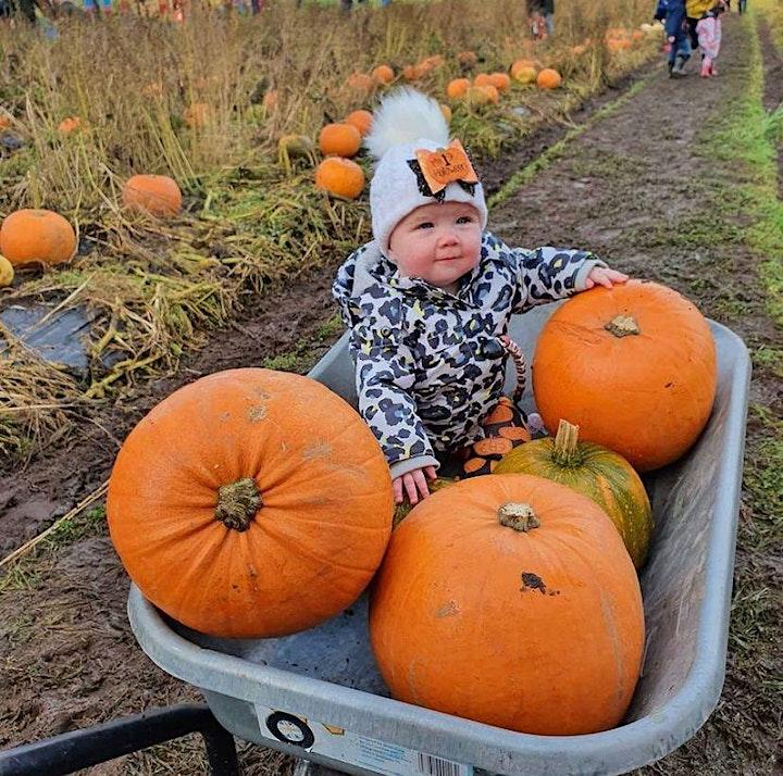 ASN Arnprior Pumpkin Picking  2021 image