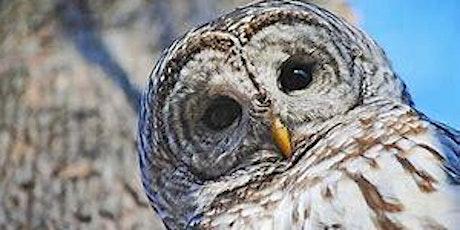 Mount Greylock Owl Prowl tickets