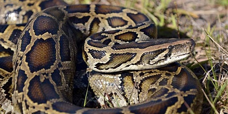 Python Patrol Virtual Thursdays - November 18, 2021 entradas