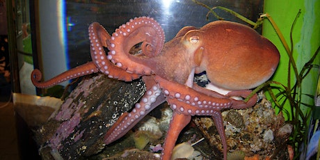 Mini Explorers (ages 3-5) - All about an Octopus tickets
