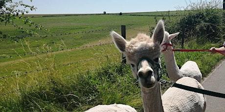 Alpaca Walking Experience tickets