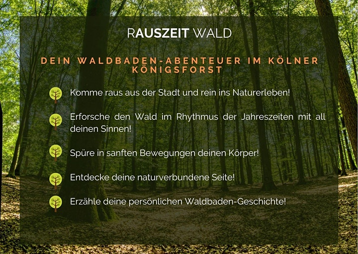 RAUSZEIT WALD: Bild