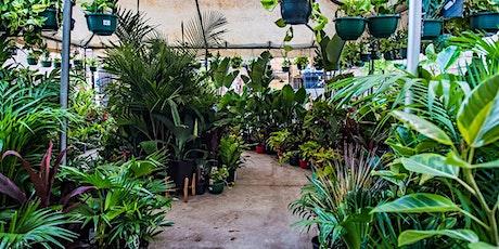 Brisbane  - Huge Indoor Plant Warehouse Sale - Springtime Splendour tickets