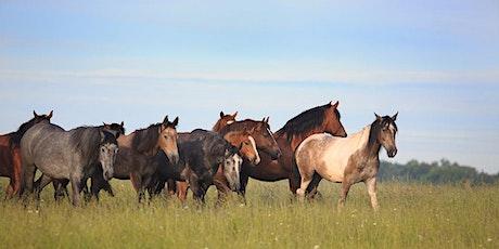 """Onlinekurs """"Zivilisationskrankheiten des Pferdes"""", mit Dr. Christina Fritz tickets"""