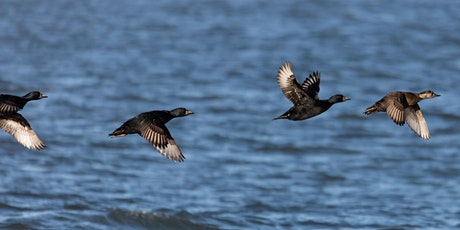 From Ware Geese to Whaups - Winter Birds of the North East Coast tickets