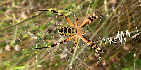 Wildlife Watch - Spooky Spiders and Funky Fungi tickets