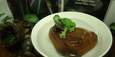 Discover: Frogs! tickets