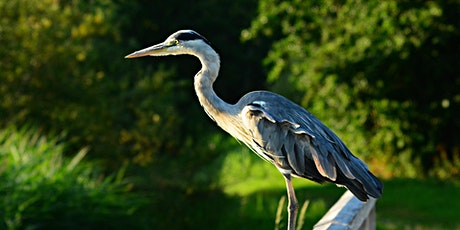 Wildlife Walk for Adults tickets