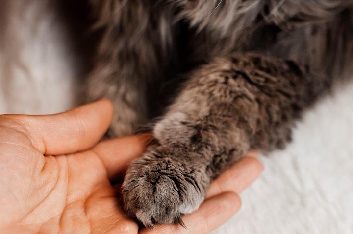 Animal Essential Touch Methode - Zertifizierungskurs Katze: Bild