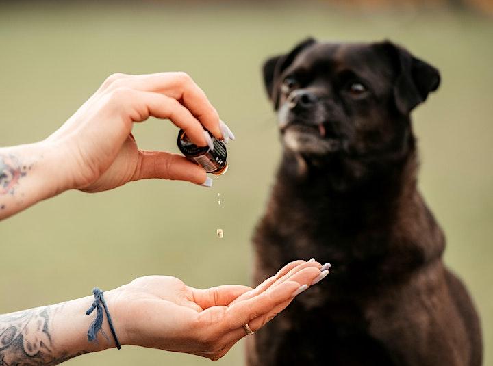Animal Essential Touch Methode - Zertifizierungskurs Hund: Bild