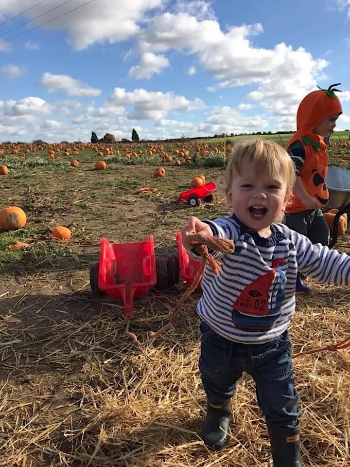 Pumpkin Jim's PYO Pumpkins image