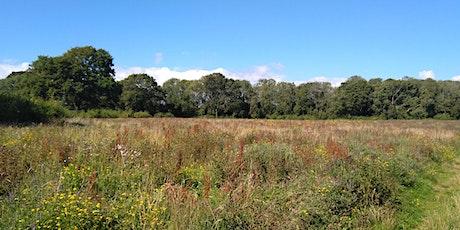 Wildlife Trust Meadow Sweep tickets
