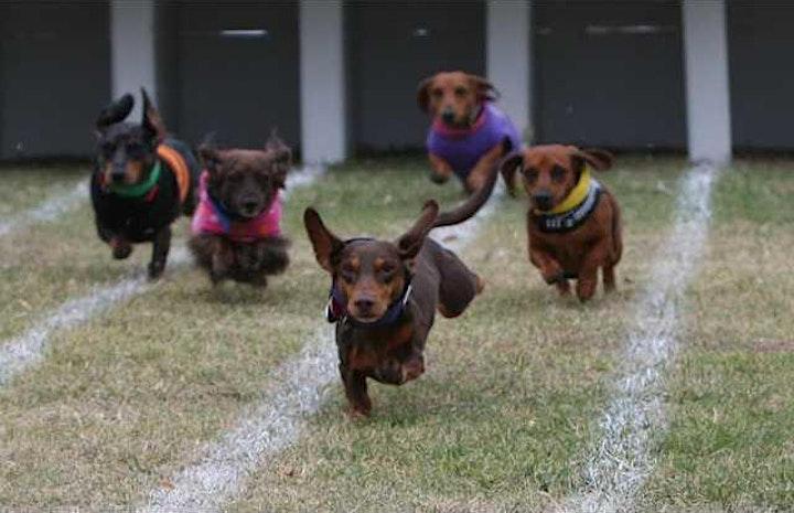 Weiner Dog Race image