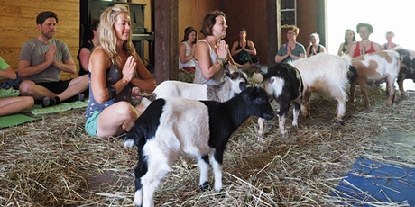 Goat Yoga Asheville - Morning Session tickets