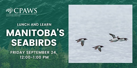 Manitoba's Seabirds: The Feathered Link tickets