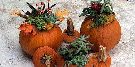 Pumpkin Gnome & Succulent Pumpkin Planter Workshop tickets
