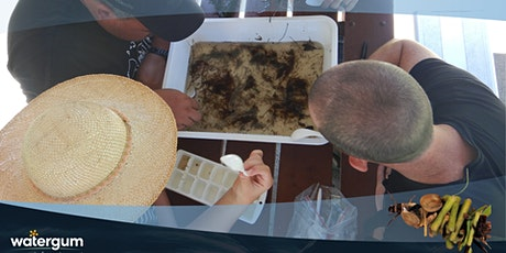 Waterbugs fun with Watergum - Kids Workshop tickets