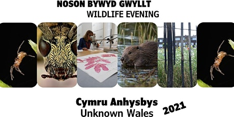 Cymru Anhysbys 2021 - digidol / Unknown Wales 2021 - digital tickets