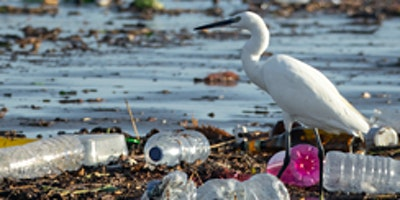VIMS: Microplastic Pollution Challenge