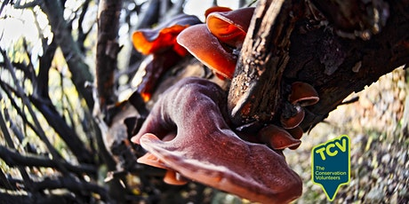 Fungi Surveying Workshop - TCV The Paddock tickets