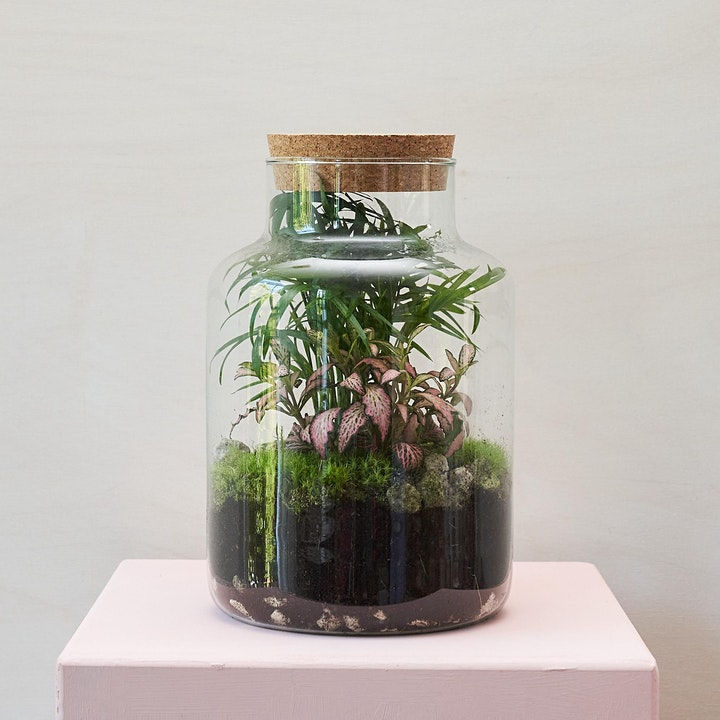Terrarium Workshop with Green & Wild image