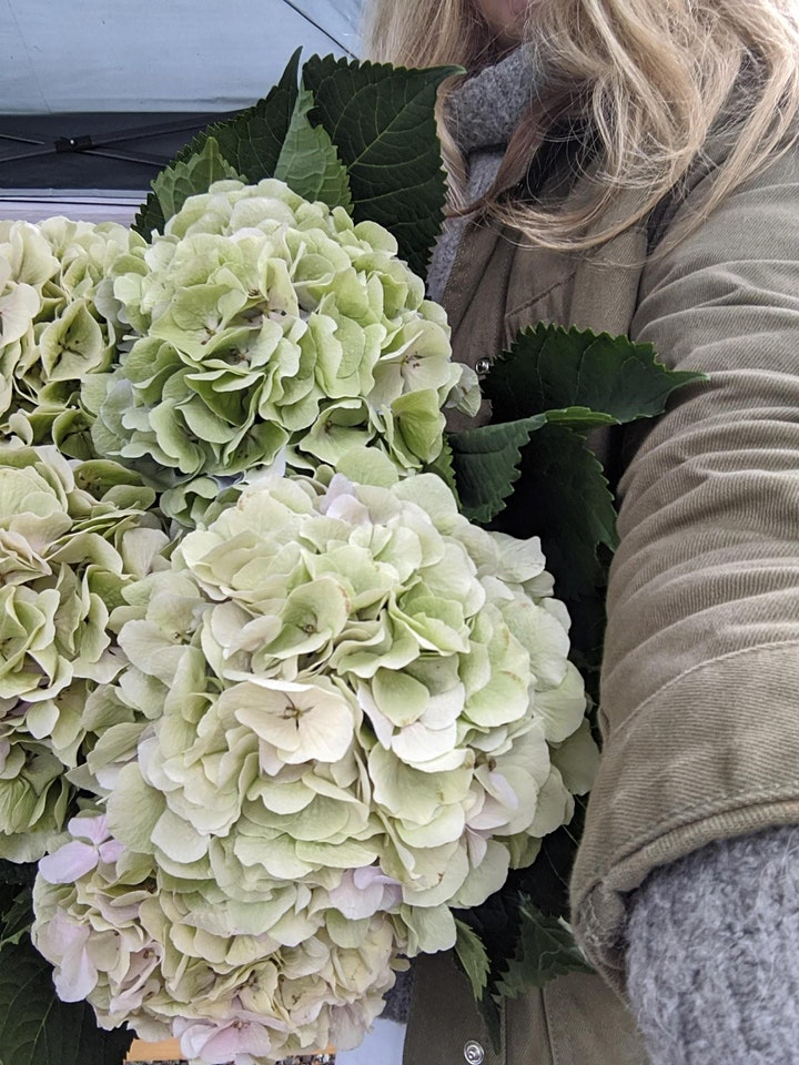 Autumn  flower styling with hydrangeas image