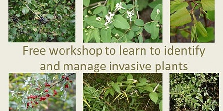 Tackling invasive species in your yard tickets