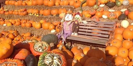 Llynclys Hall Farm Shop Pick Your Own Pumpkins tickets