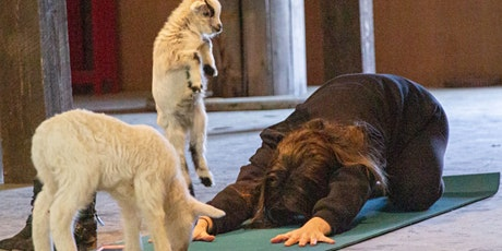 Goat Yoga Asheville - Afternoon DisGoat Party! tickets
