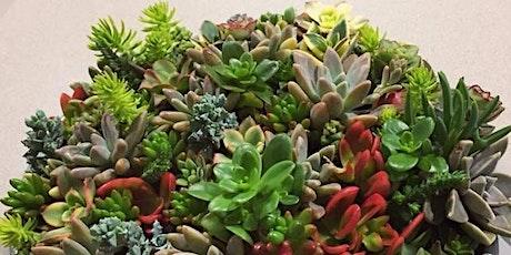 Living Colour - Succulent Bowl Workshop tickets