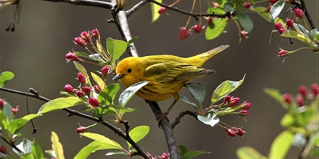 Kirtland Bird Club presents: Plants for Birds and Pollinators tickets