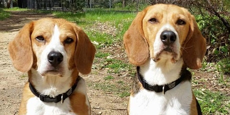 Dog body language: learn the language of your best friend tickets