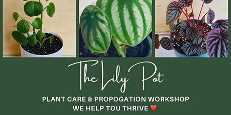 Lily Pot Plant Care and Propagation Workshop tickets
