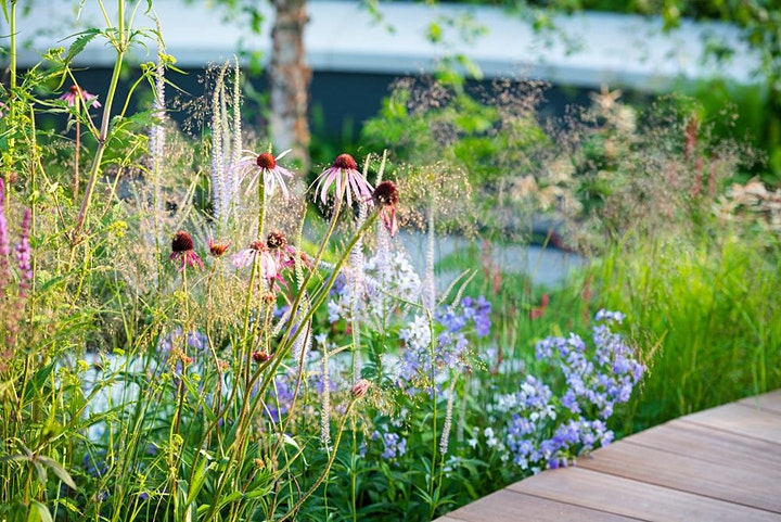 LCGD Autumn Info Bursts | Colour, texture and tone – new planting designers image