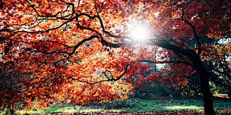 Autumn Series of Meditations from Solas Bhride Spirituality Centre (No. 3) tickets
