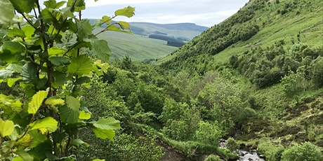 Moffat 2021 - Walk with the Borders Forest Trust - Carrifran tickets