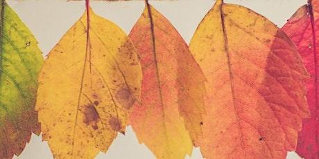 11-3-21 Florida Fall Colors tickets