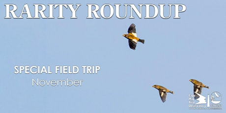 Rarity Roundup tickets