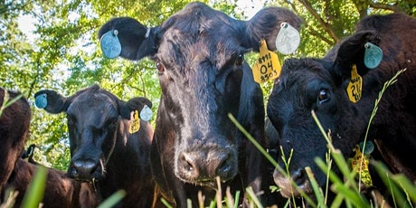 Maryland Beef Producers Short-course Series III - Pasture Management tickets