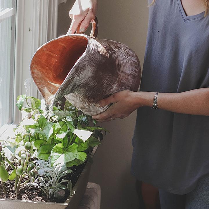 MPowder Meno-Well Programme: Your garden as a medicine cabinet image