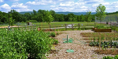 Food Safety, Supply Chain and Need for Growing a Healthy Organic Garden