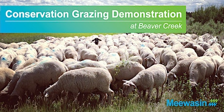Sheep Grazing Demonstrations at Beaver Creek Conservation Area tickets
