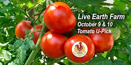 Live Earth Farm Tomato U-Pick tickets