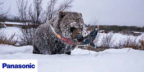 Wildlife Photography - Chasing The Last Ice Bears tickets