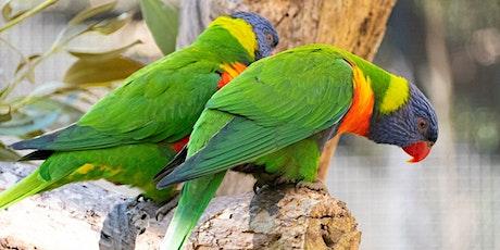 Birds of Boroondara - Aussie Backyard Bird Count event tickets
