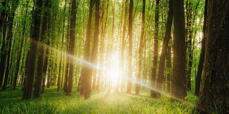 Friday Reviver: Walking, talking and shiatsu in the woods tickets