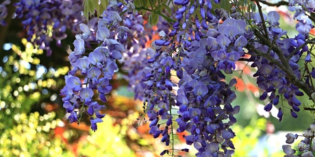 All Year Round Garden Colour And Interest tickets